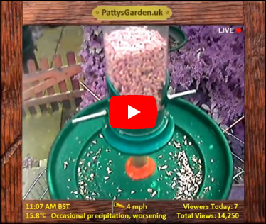 Pond Cam & Bird Feeder Cam Sheffield United Kingdom - Webcams Abroad live images